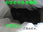 081109_2.jpg